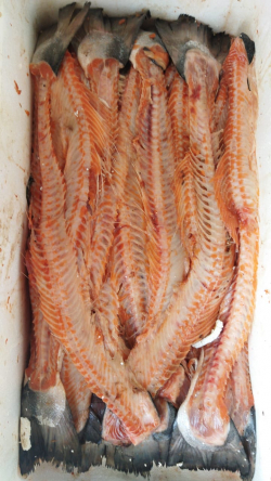 Хребты красной рыбы